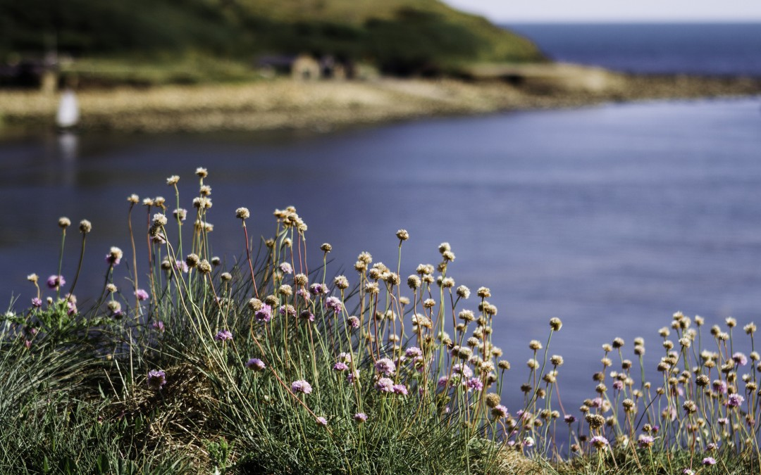Reasons to visit Pembrokeshire in the spring